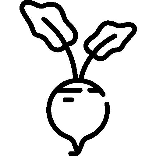 A beterraba é usada para tingir a carne de planta